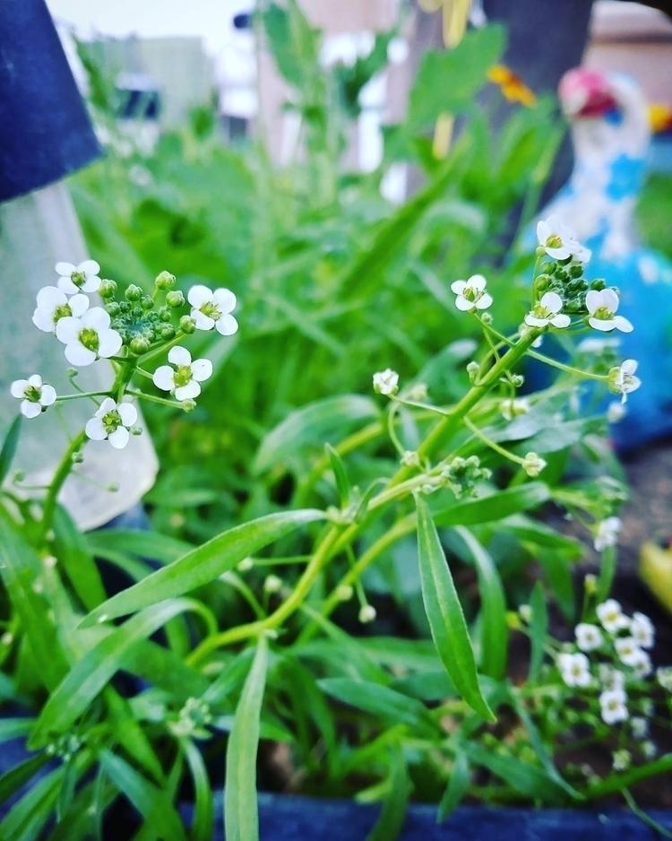 moments Follow pictures - photograph - meliartz | ello