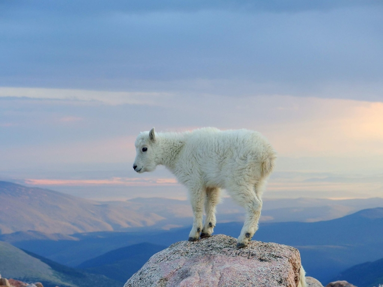 mt evans, CO - dmitro | ello