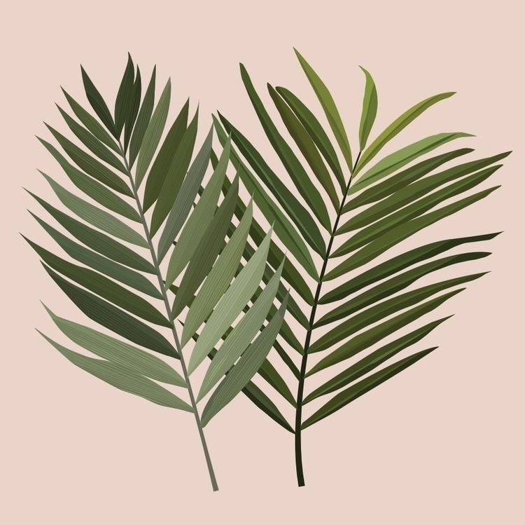Palm leaf - illustration, illustrator - studio_liu | ello