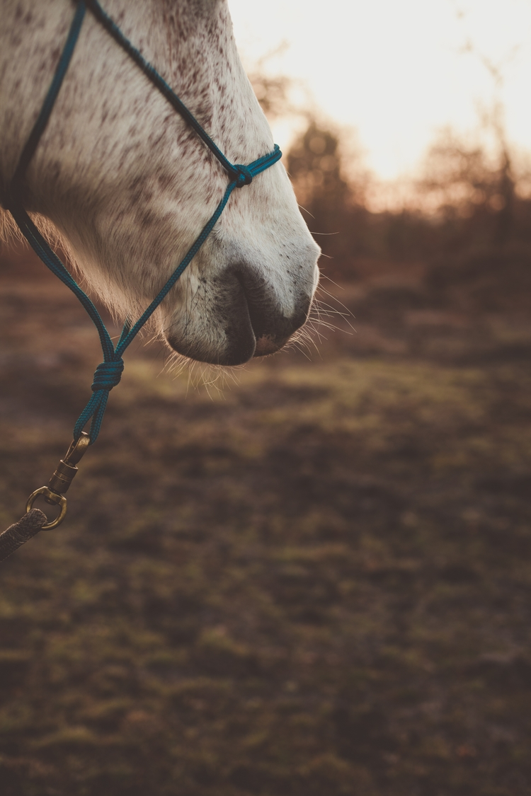 teacher photograph horse. happe - melissadupuch-photography | ello