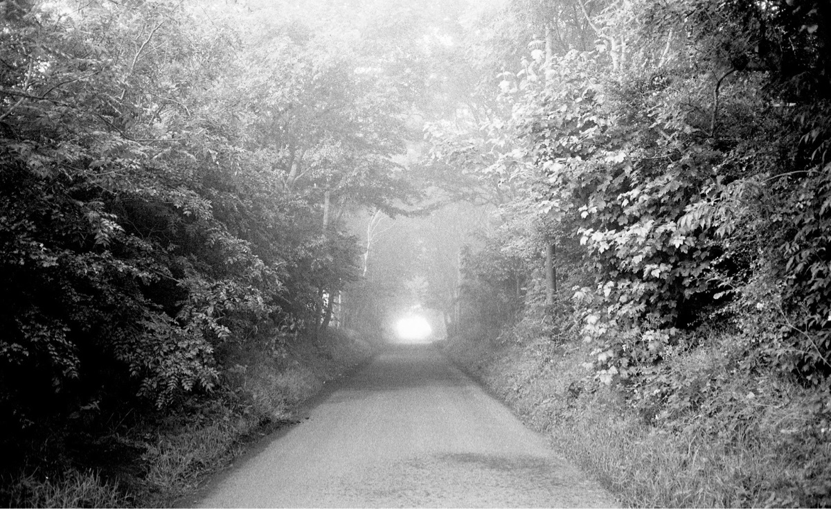 Summer fog - photography, filmphotography - jmo   ello