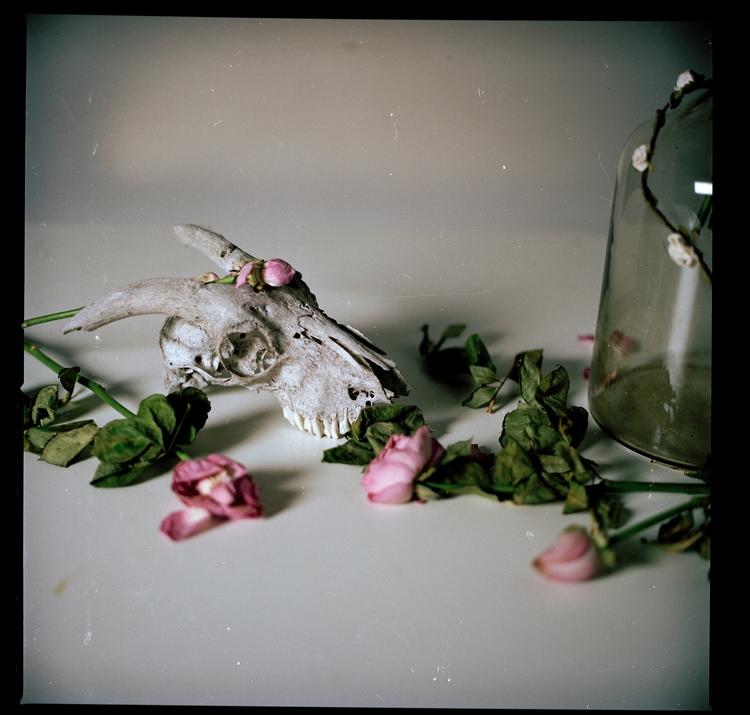 Studio Work - photography, film - domreess | ello