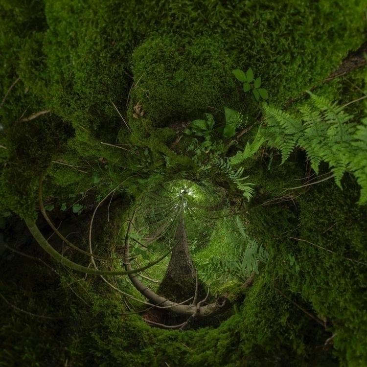 fougères arbre, vus par campagn - pixotrope   ello