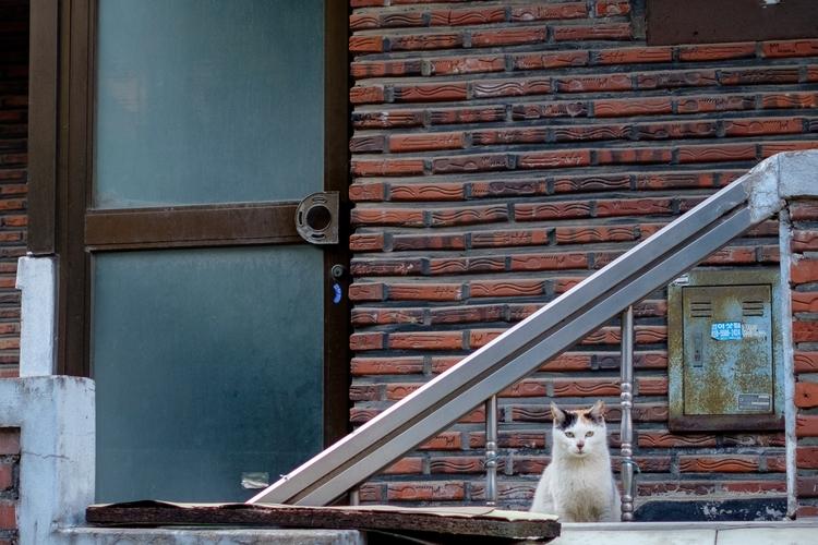 streetphotography, fujifilm, fujifeed - berryphillips | ello