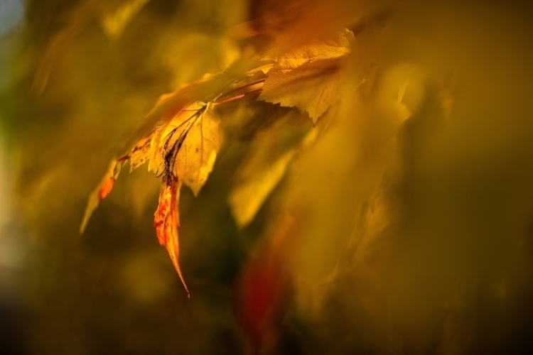 Enchanting Autumn - ello, photography - panioan | ello
