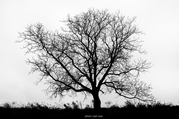 rooted Earth - ello, photography - panioan   ello