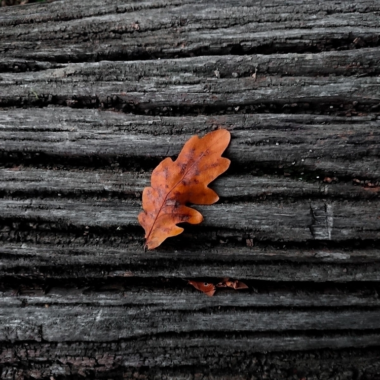 leaf, bark, minimalism, photography - deepobserver0n | ello