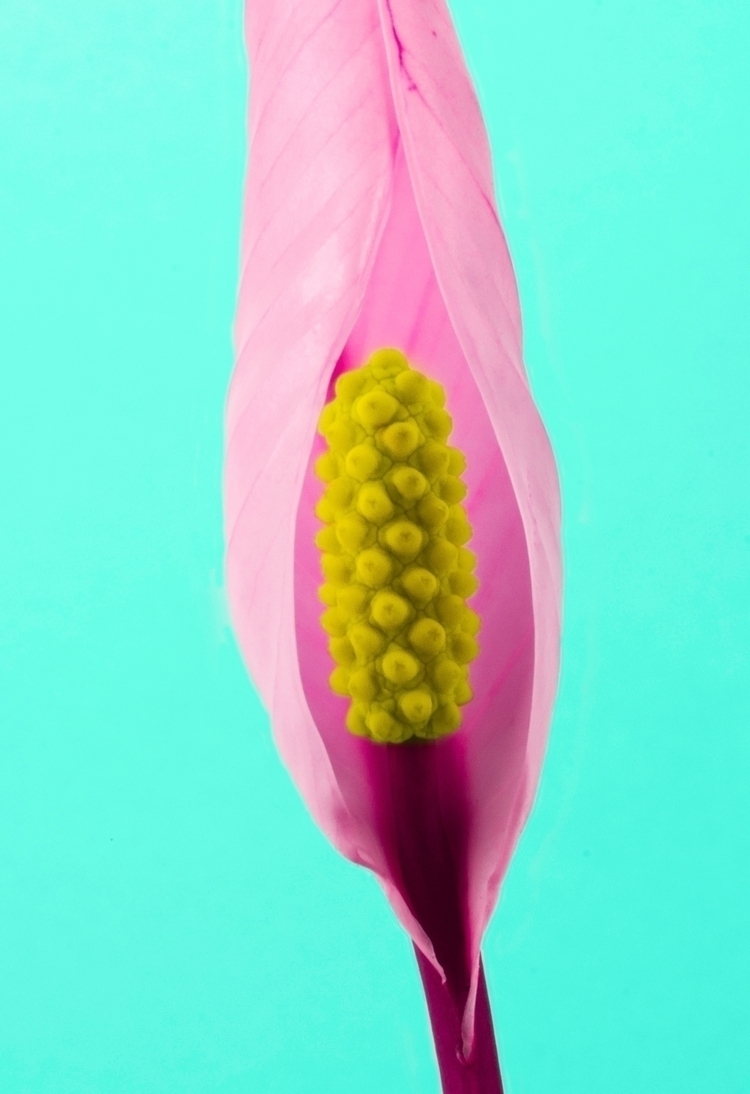 Flower Porn: Swell - flowerporn - bespokephoto | ello