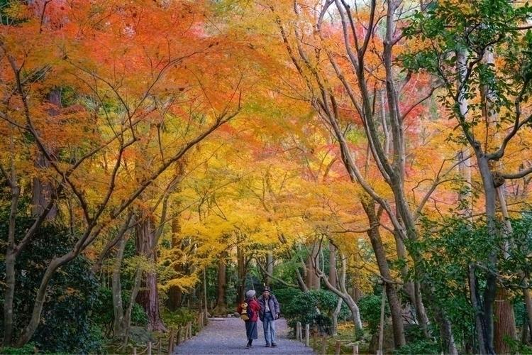 京都龍安寺  - 龍安寺, ryoanji, ryoanjitemple - afteralongtrip | ello