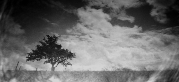 Lone Tree. noon pinhole camera - graeme83 | ello