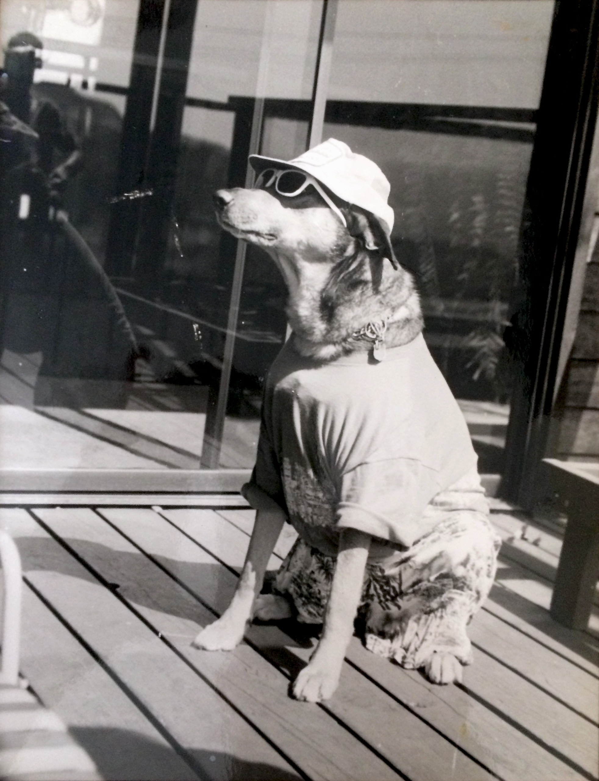 Analog Dog ~ 1980 high school p - jeffkratsch | ello