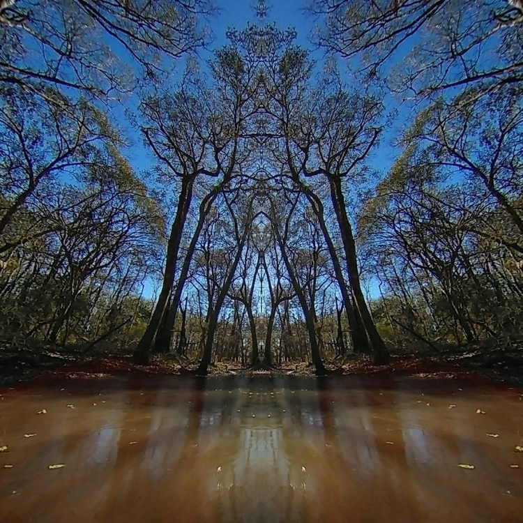 Tree life - photoart - jeremybpperez | ello