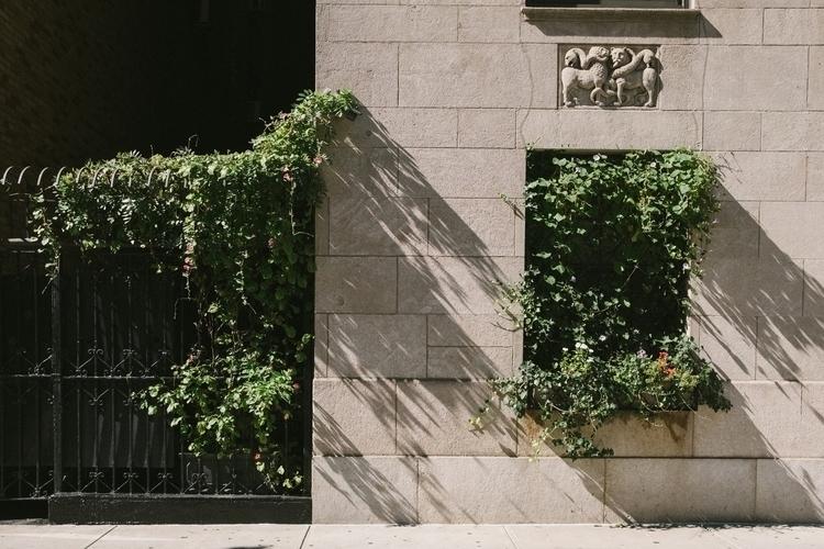Grape Vines idea window - streetphotography - mikeyboards   ello
