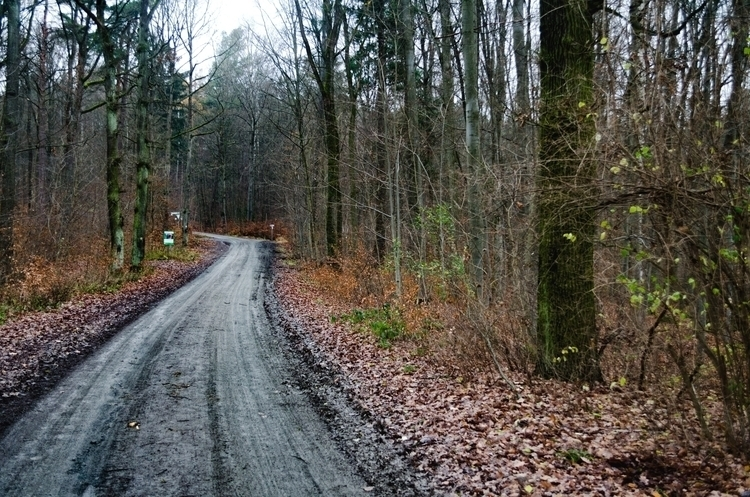 Road Woods - landscape, d5100, photography - marcuswilsonculley | ello