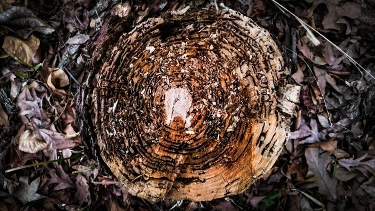 Tree Stump. Rock Creek Rock, AR - roberthinojosa | ello