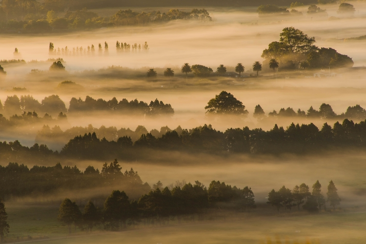 Trees Sea magical crisp misty m - ambiant_photography | ello