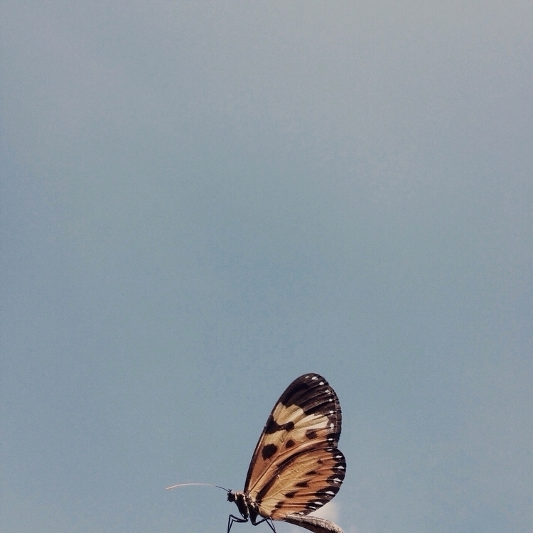 photography, nature, butterfly - thulios | ello