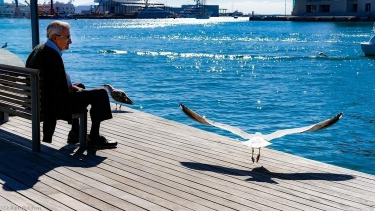 Man Sea(Gull), Rambla De Mar, B - shutterstalk | ello