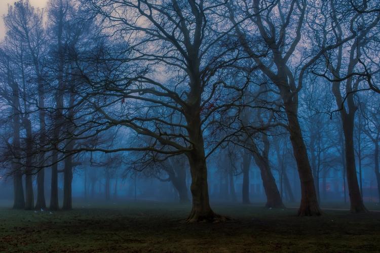 Misty park Haarlem - Photography - arnevanoosterom | ello