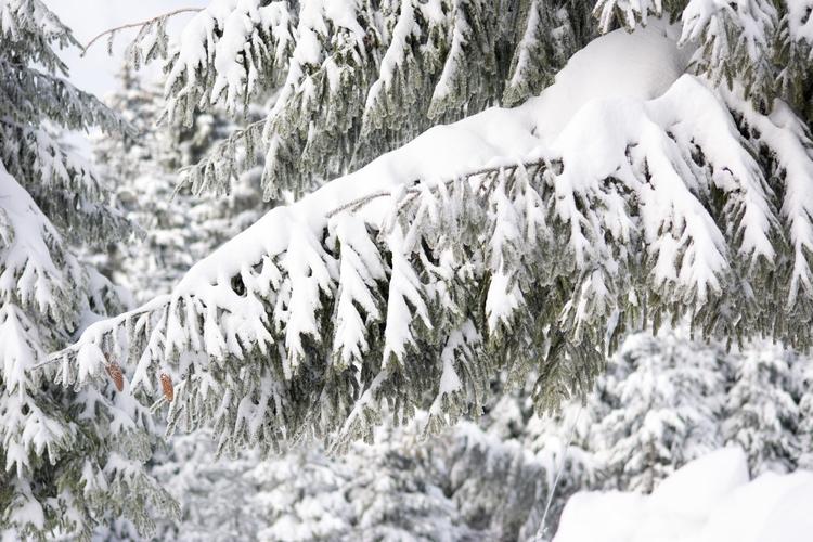 taste Carpathian winter - sorinmatei | ello