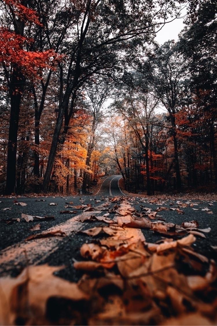 fall, leaves, orange, road, roads - imthejam | ello