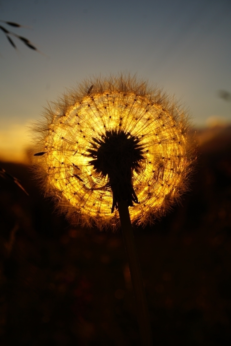 sunset, flower, evening, light - exploredonia | ello