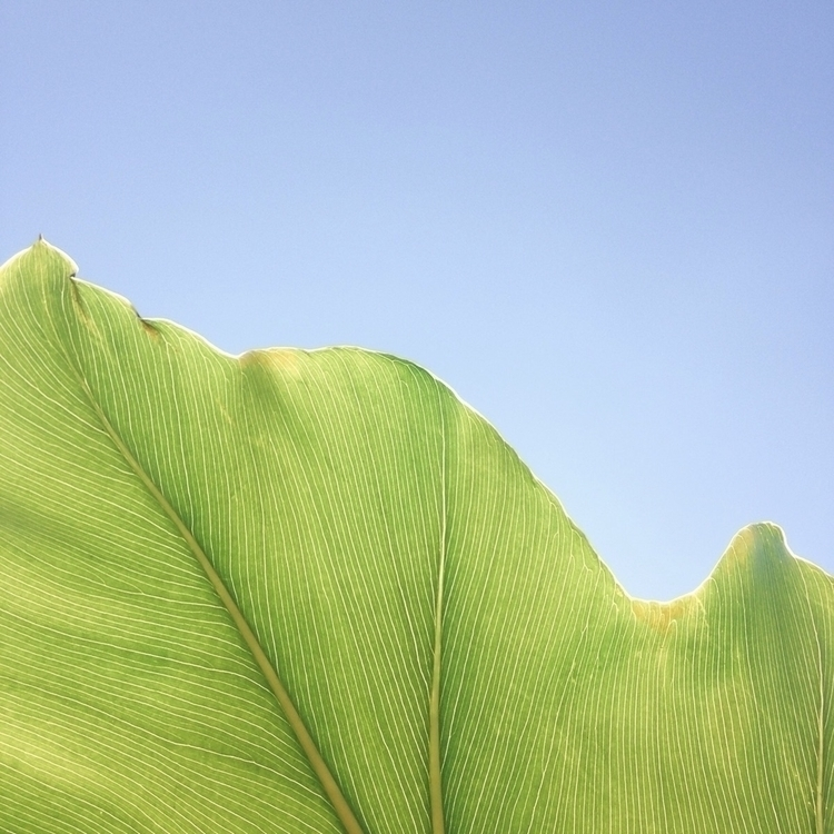 Leaf - nature, ellophotography, photography - thulios | ello