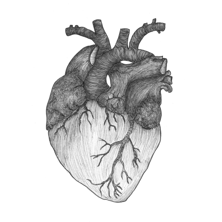 Heart (2015) - fine line illust - tracyning | ello