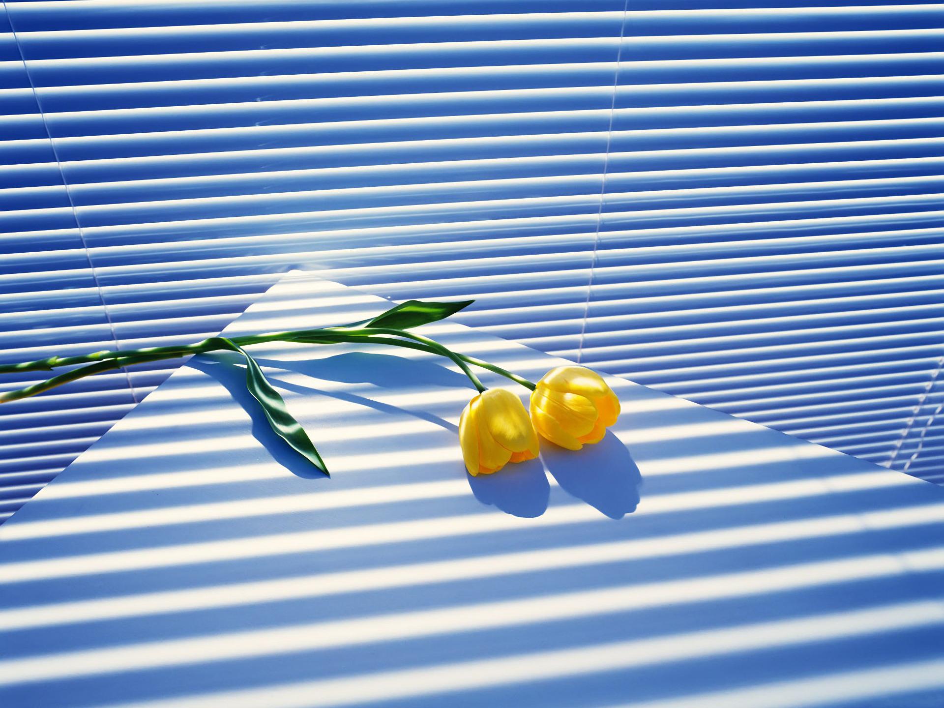 Daily Tulip – News World Tuesda - robert-mcangus | ello