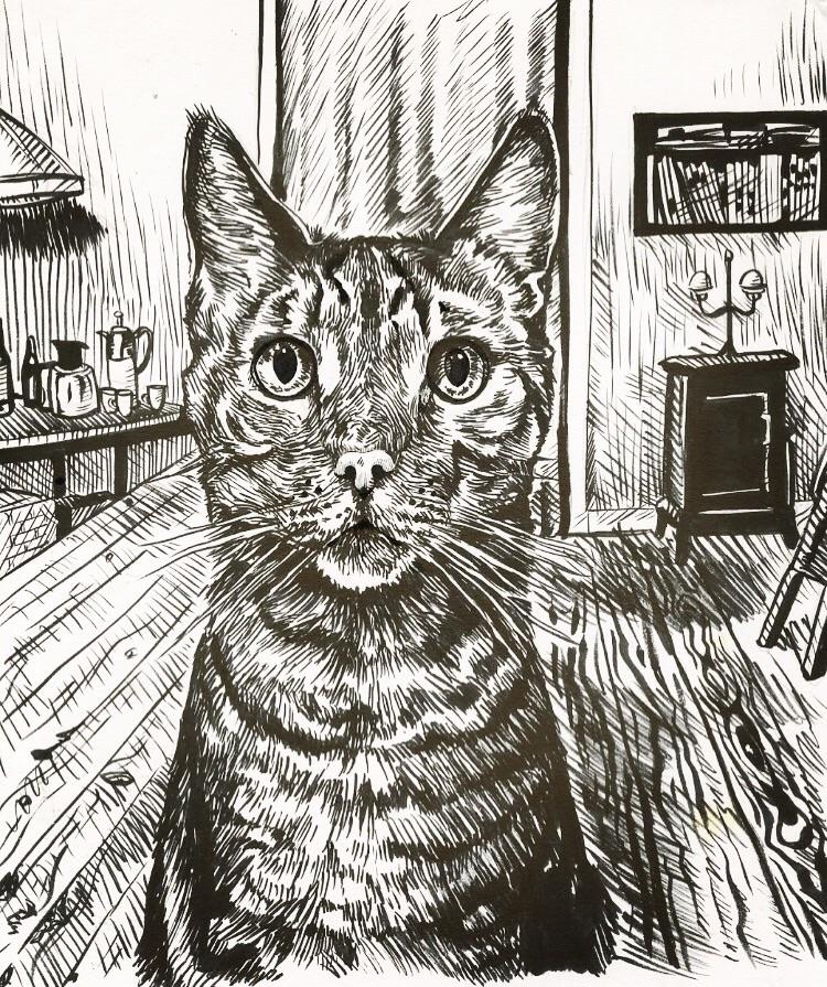 Kitty!  - cat, kitty, drawing - tjd4art | ello