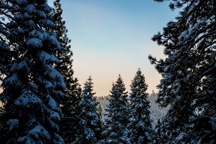 Stopped Tahoe, CA moment snowy  - katherineacart | ello