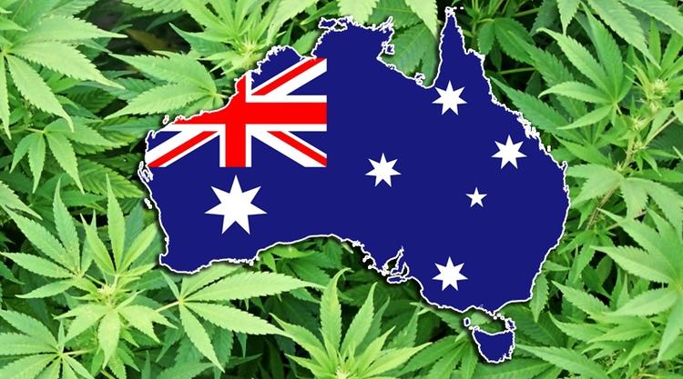 Cannabis Australia - ministryofcannabis | ello