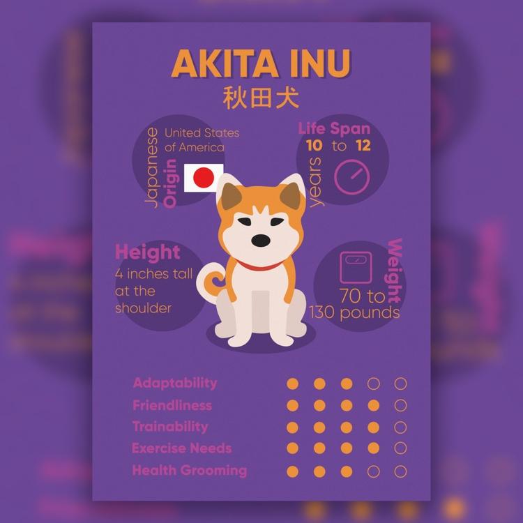 Infographics - ringu | ello