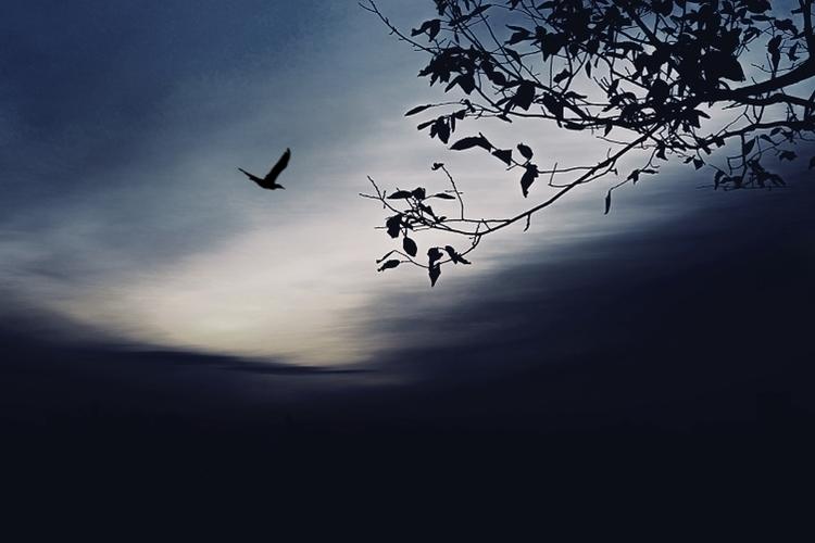 beautiful, bird, treebranch, cloud - hoovertung | ello
