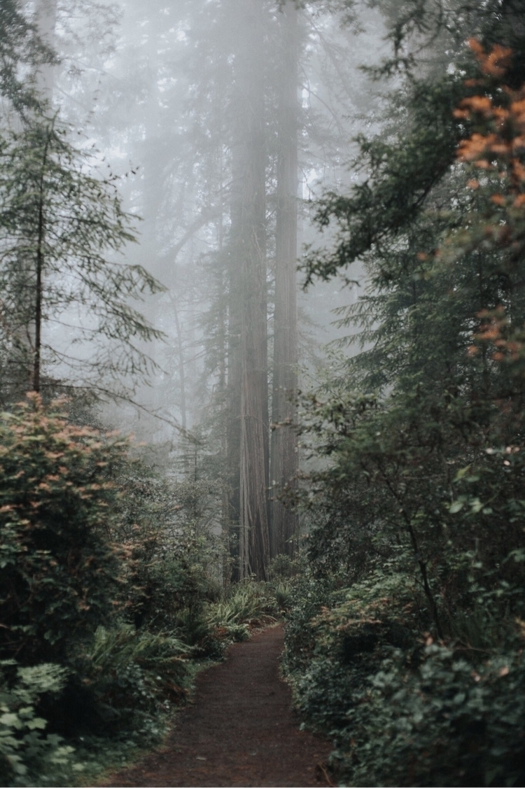 photo. edit - redwoods, canonphotos - joelfoust | ello