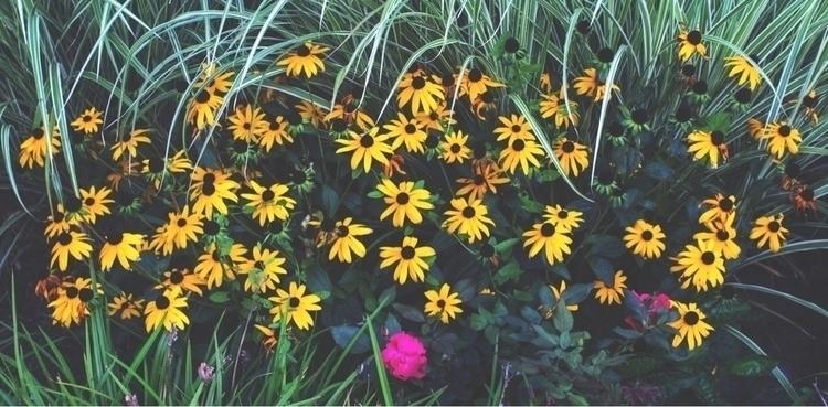 Flower Boy - photography, flowers - kcirwerdna | ello