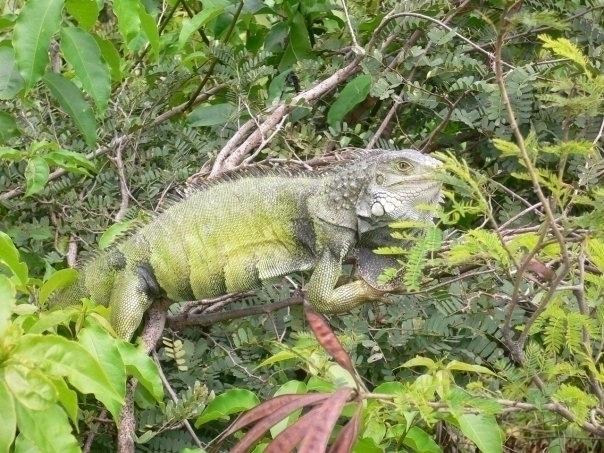 Vieques, Puerto Rico Tree Chick - mlvmt | ello