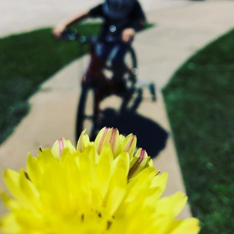 flower, photography - mlvmt | ello
