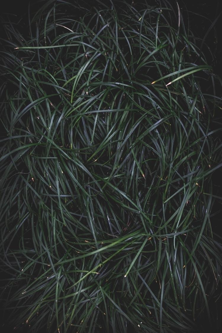 grass, canon5d - scottgotshot | ello