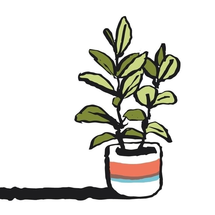 House plants - illustration - mfslayton | ello