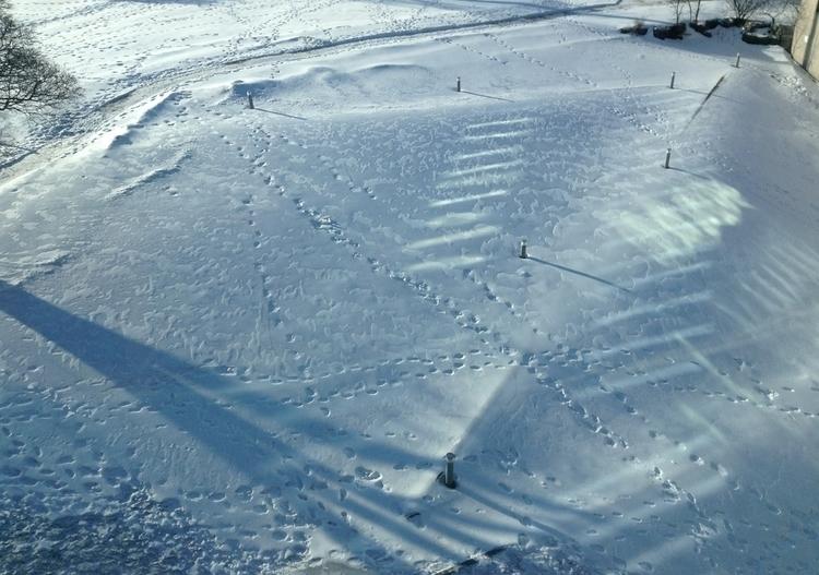 Snow Field - photo, snow, winter - dispel | ello