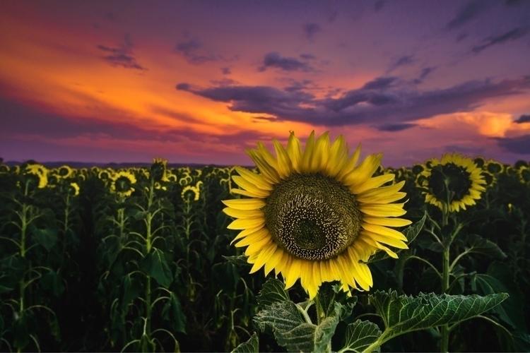 drive 4.5 hours happy sunflower - thatpurplehairgirl | ello