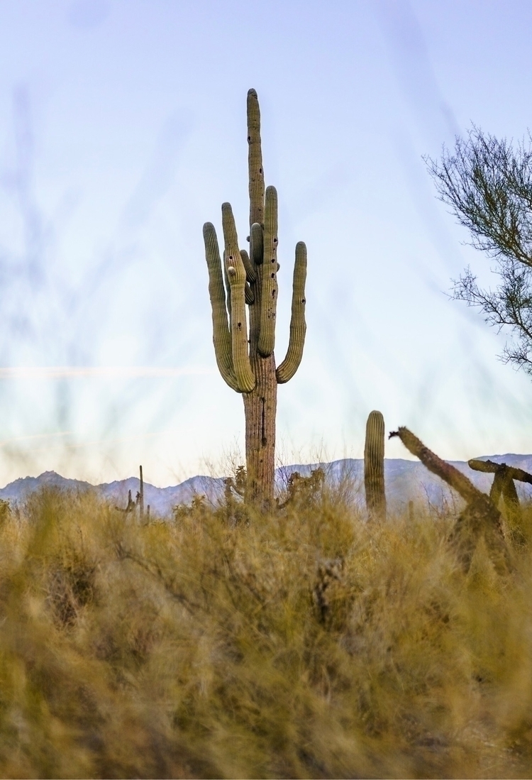 friends morning - Saguaro, arizona - khalildashay | ello