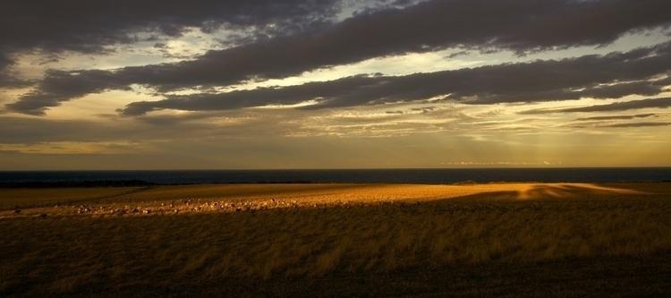 Tasmanian Farmland - sheep - robdcaptures | ello