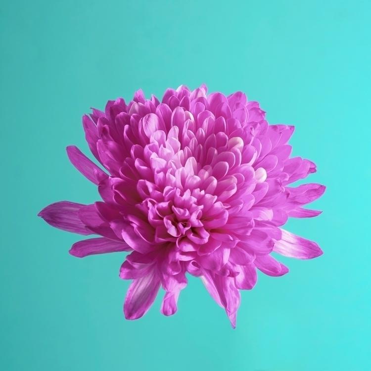 Blossom - thingsmakemefeelalive - fattyfreddie | ello