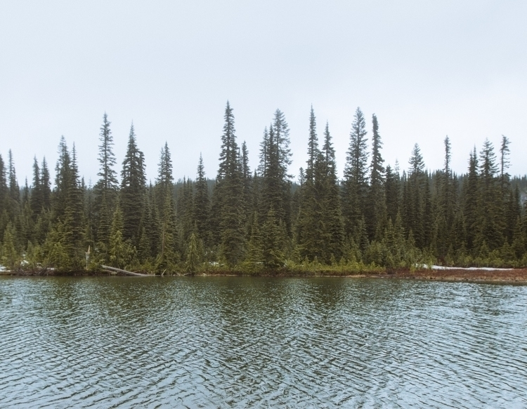 Mount Rainier National Park. Wa - mike_sap | ello