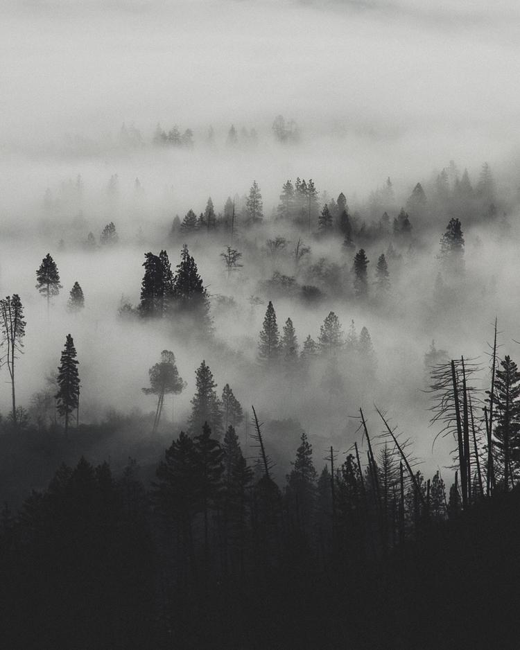 foggy descent Pacific Northwest - rusticatlas   ello