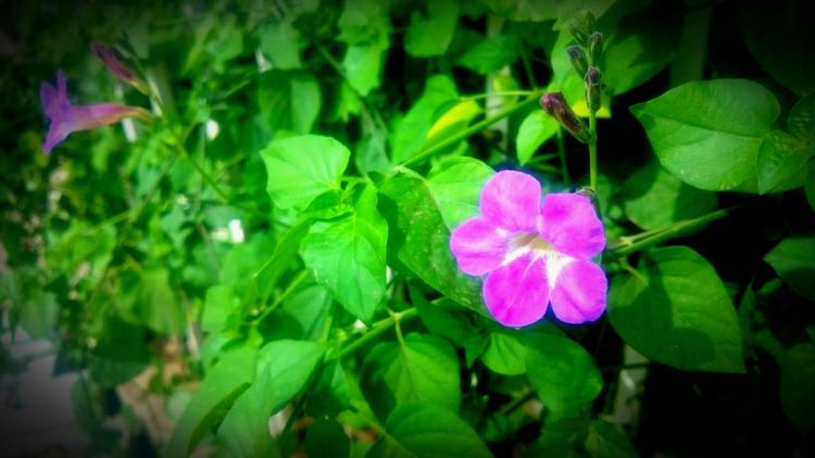 India, Flower - atulbw | ello