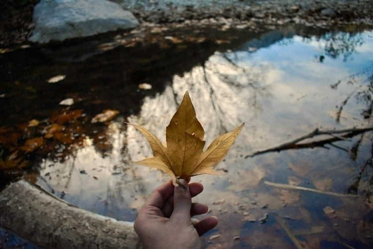 Nature - nature, aqua, valencia - esmaphoto   ello