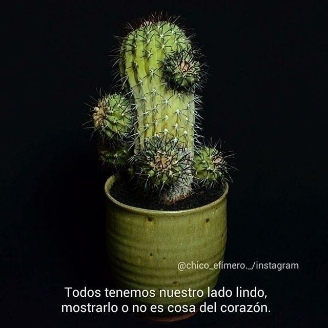 :cactus - chico, efimero, official - chicoefimero | ello